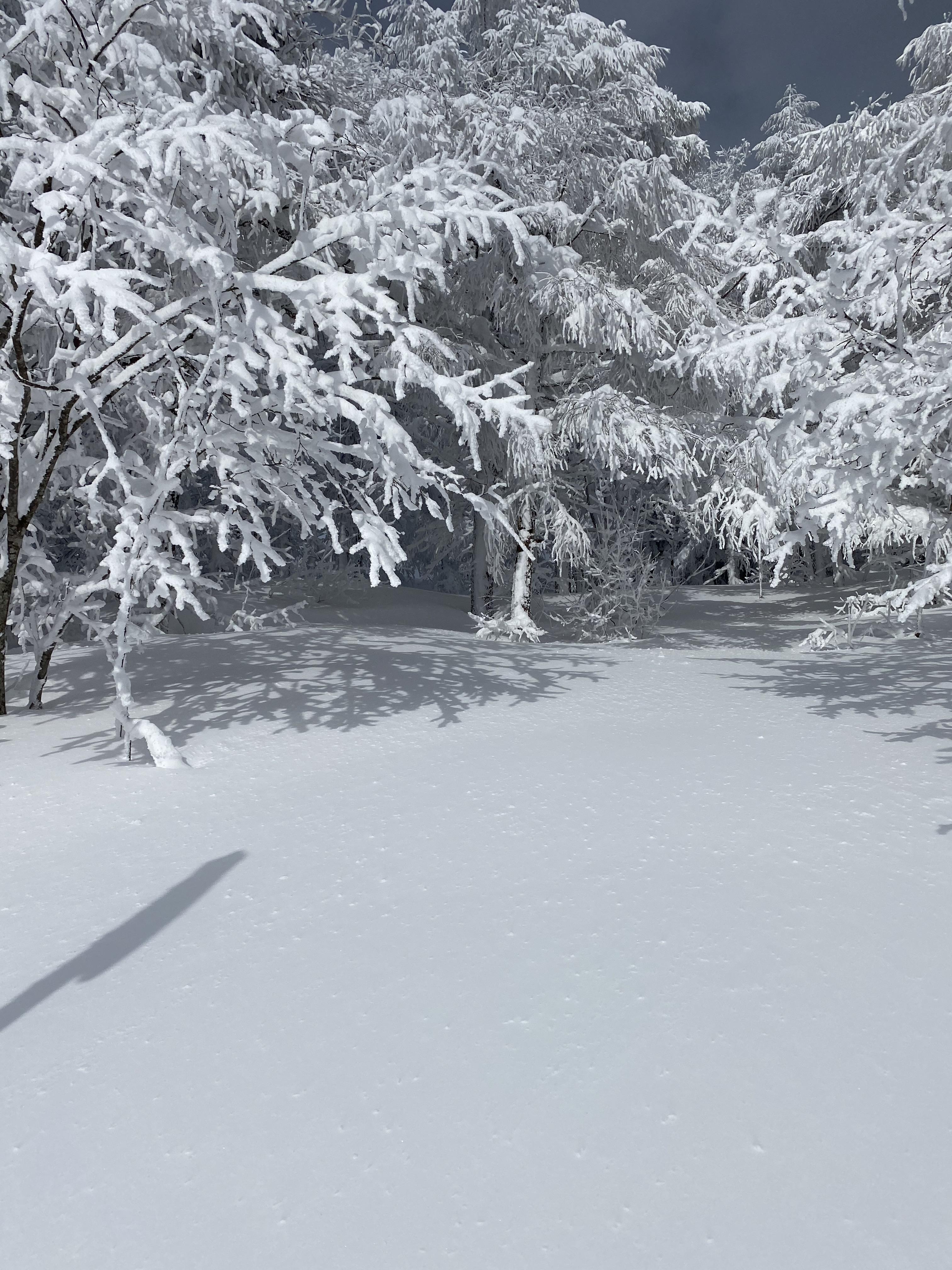 IMG_2415.JPGのサムネイル画像